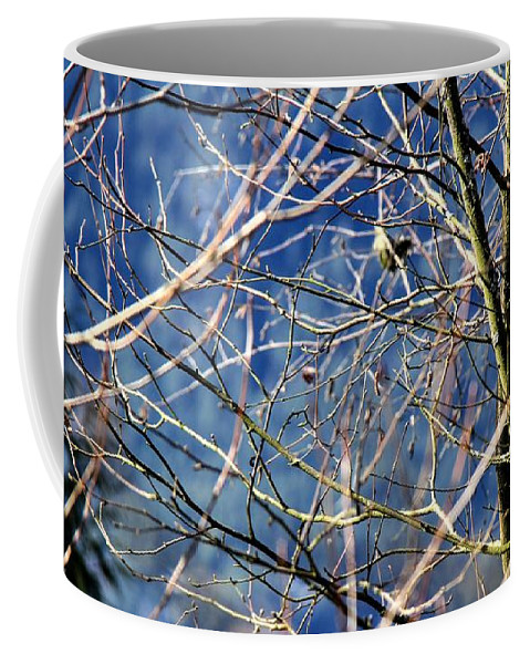 Spring Coffee Mug featuring the photograph Spring To Life by Karen Scott