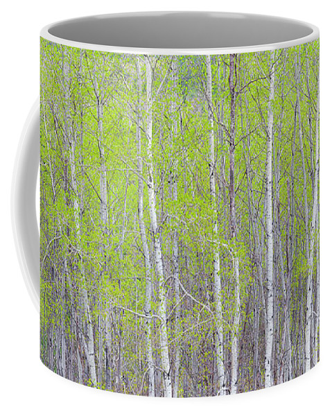 Spring Coffee Mug featuring the photograph Spring Woods by Alan L Graham