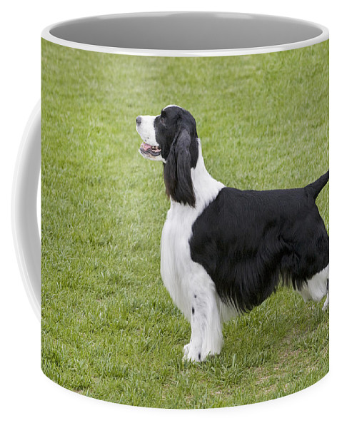 Black And White Coffee Mug featuring the photograph Springer Spaniel by Buddy Mays