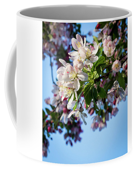Springtime Coffee Mug featuring the photograph Springtime In Bloom by Denise Harty