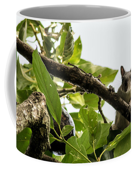 Squirrel Coffee Mug featuring the photograph Squirrel 3 by Totto Ponce