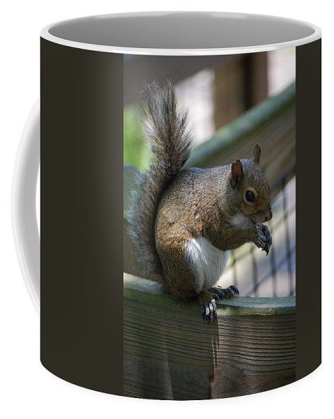 Squirrel Coffee Mug featuring the photograph Squirrel II by Robert Meanor