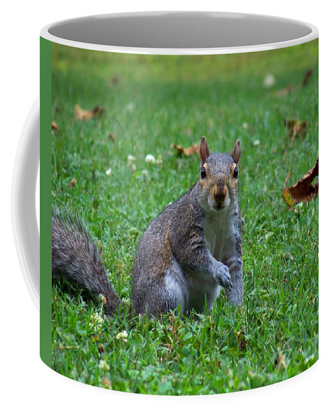 Squirrel Coffee Mug featuring the photograph Squirrel Iv by Jai Johnson