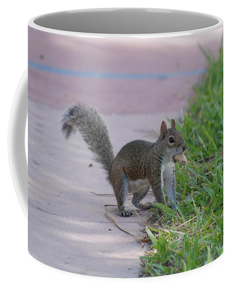 Squirrels Coffee Mug featuring the photograph Squirrel Nuts by Rob Hans