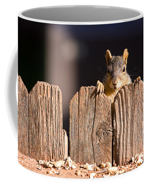 Squirrel Coffee Mug featuring the photograph Squirrel On The Fence by James BO Insogna