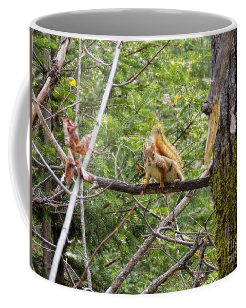 Squirrels Coffee Mug featuring the photograph Squirrel Standoff by William Tasker
