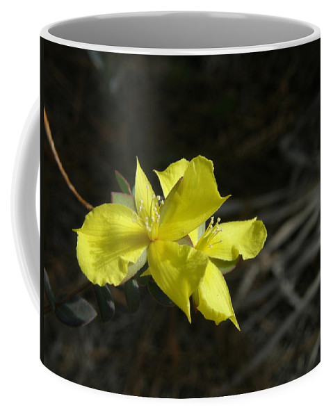 Flower Coffee Mug featuring the photograph St. John by Kimberly Mohlenhoff
