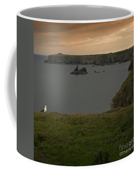Stackpole Quay Coffee Mug featuring the photograph Stackpole Quay by Angel Ciesniarska