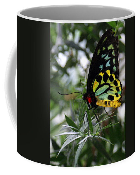 Butterfly Coffee Mug featuring the photograph Stained Glass Butterfly by Jean Haynes