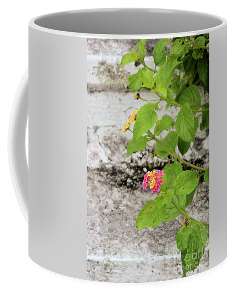 Flowers Coffee Mug featuring the photograph Stairs Of Sapelo Island by Katherine W Morse