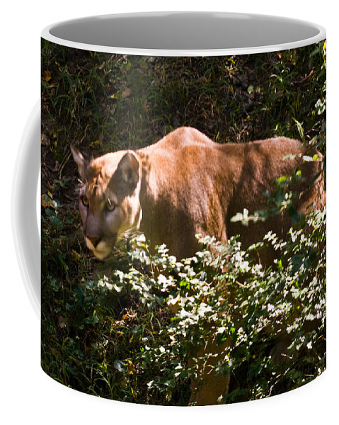 Cat Coffee Mug featuring the photograph Stalking Big Cat by Douglas Barnett