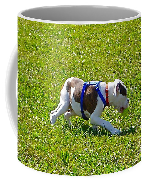 Dog Coffee Mug featuring the photograph Stalking by E Robert Dee