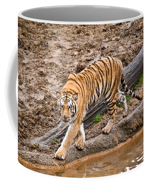 Tiger Coffee Mug featuring the photograph Stalking Tiger - Bengal by Douglas Barnett