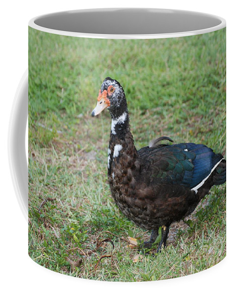 Ducks Coffee Mug featuring the photograph Standing Duck by Rob Hans