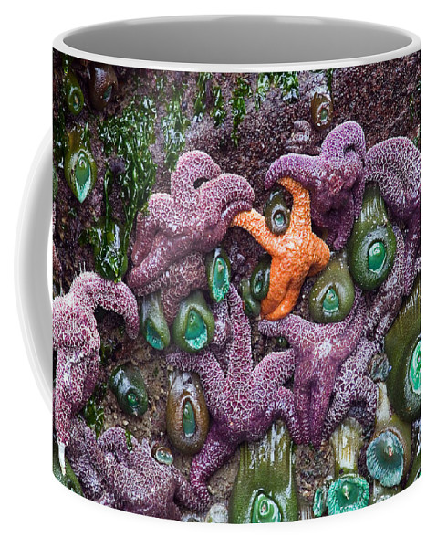 Starfish Coffee Mug featuring the photograph Standing Out by Randall Ingalls