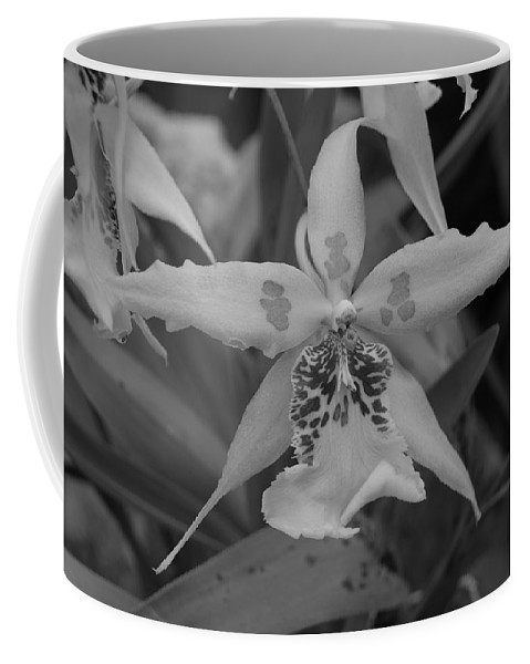 Macro Coffee Mug featuring the photograph Star Flower by Rob Hans