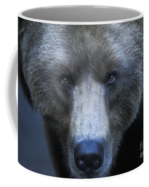 Yellowstone Coffee Mug featuring the photograph Stare Down by Sandra Bronstein