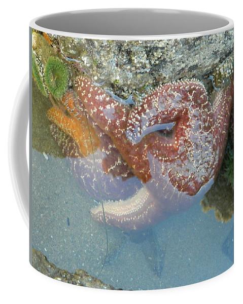 Starfish Coffee Mug featuring the photograph Starfish Sandwhich by Gallery Of Hope