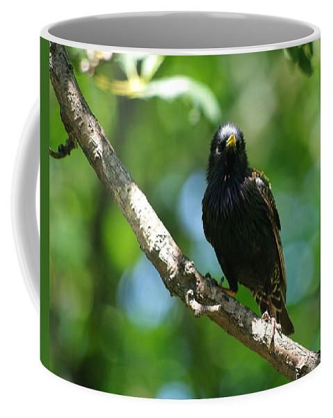Jenny Gandert Coffee Mug featuring the photograph Starlet by Jenny Gandert