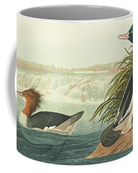 John James Audubon (after) Goosander...cohoes Falls Coffee Mug featuring the painting State Of New by John James