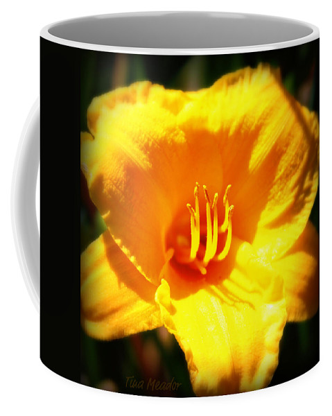 Flower Coffee Mug featuring the photograph Stella by Tina Meador