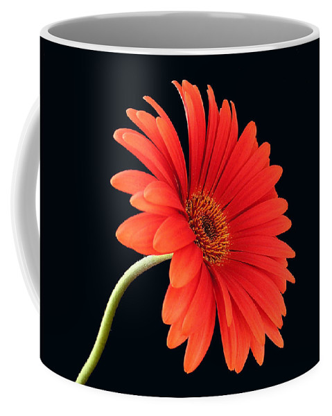 Flower Coffee Mug featuring the photograph Stemming Beauty by Carol Milisen