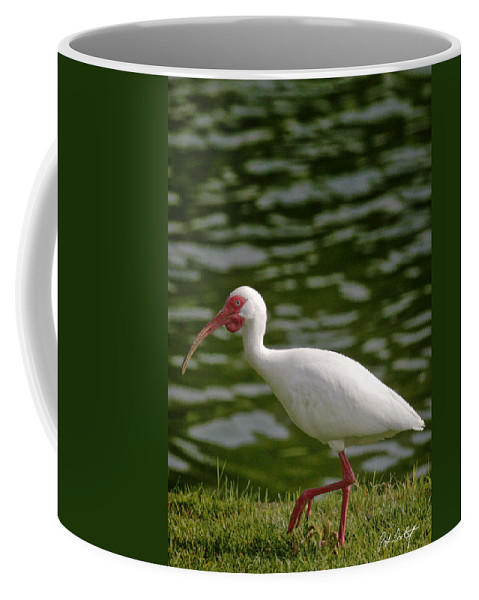 Bird Coffee Mug featuring the photograph Stepping Out by Phill Doherty