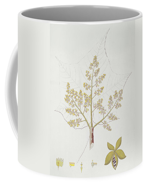 Sterculia Urens Coffee Mug featuring the painting Sterculia Urens by English School