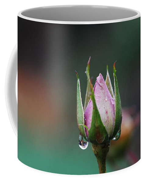 Rose Coffee Mug featuring the photograph Sterling Rose by Donna Blackhall