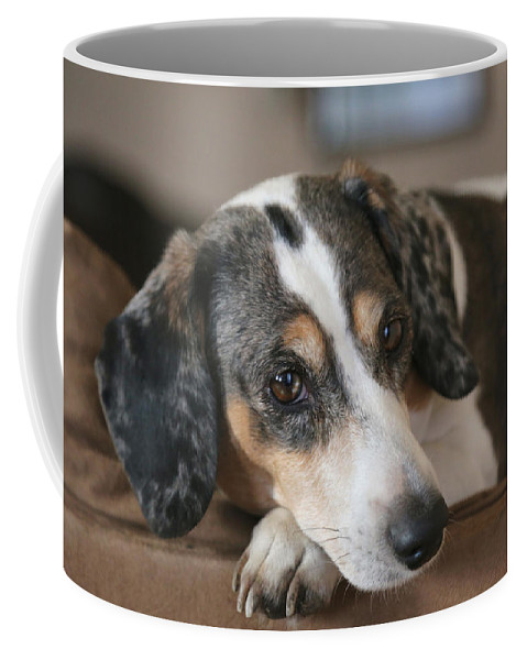 Dog Coffee Mug featuring the photograph Stewie - Family Dog by Theresa Campbell