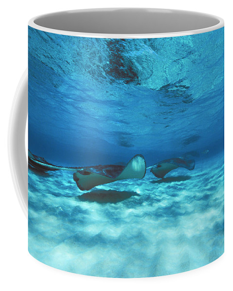 Active Coffee Mug featuring the photograph Stingray City Underwater With Stingrays by James Forte