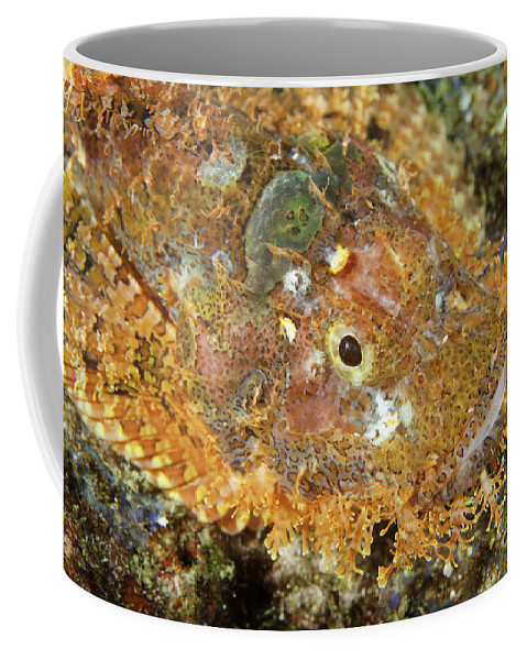 Animal Coffee Mug featuring the photograph Stonefish by Anthony Totah