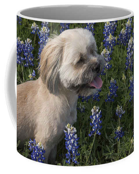 Muleshoe Bend Recreation Area Texas Bluebonnet Bluebonnets Flower Flowers Bloom Blooms Buddy Dog Dogs Animal Animals Creature Creatures Spring Coffee Mug featuring the photograph Stopped To Smell The Bonnets by Bob Phillips