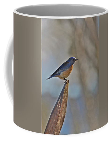 Bird Coffee Mug featuring the photograph Stopping On A Shovel by Diana Hatcher