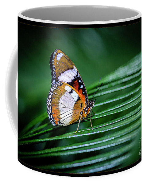Plant Coffee Mug featuring the photograph Straddling Between by Joann Long