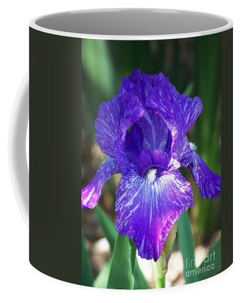 Flowers Coffee Mug featuring the photograph Striped Blue Iris by Kathy McClure