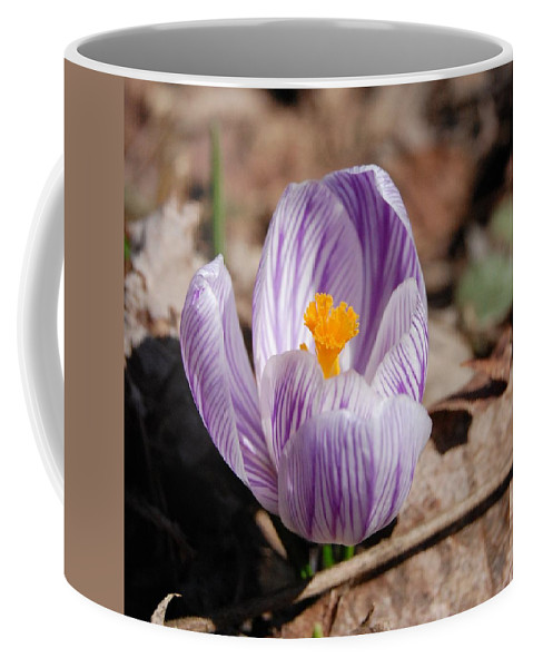 Digital Photography Coffee Mug featuring the photograph Striped Crocus by David Lane