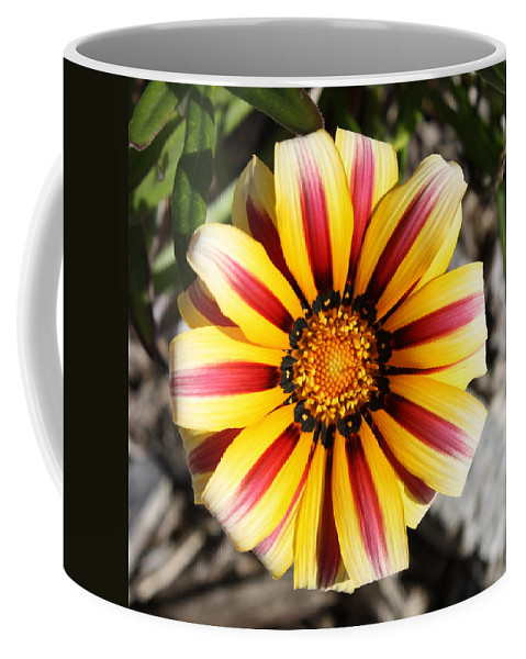 Nature Coffee Mug featuring the photograph Striped Daisy Square by Carol Groenen