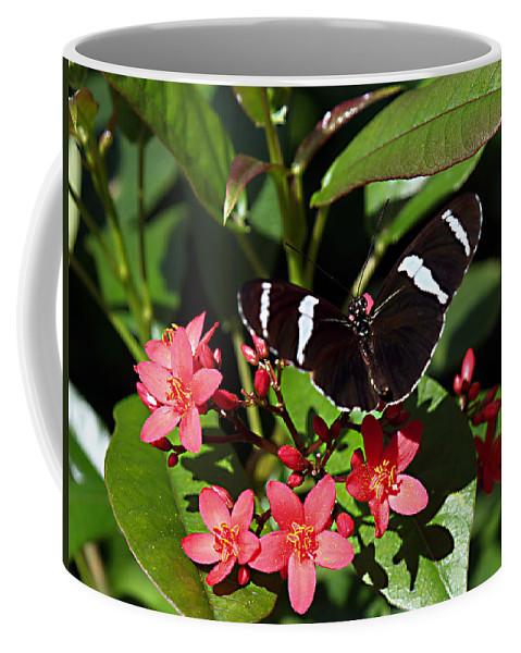Bug Coffee Mug featuring the photograph Stripes by Bob Johnson