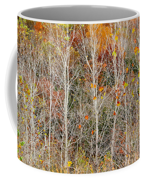 Bare Trees Coffee Mug featuring the photograph Stripped Bare To The Bark by Greg Matchick