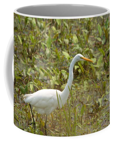 Great Egret Coffee Mug featuring the photograph Stroll Thru The Grass by Linda Kerkau