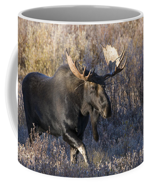 Grand Teton National Park Coffee Mug featuring the photograph Strolling Through The Willows by Sandra Bronstein