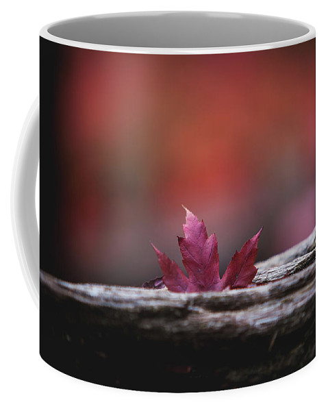 Autumn Coffee Mug featuring the photograph 'stuck In Autumn' by Still I Wander