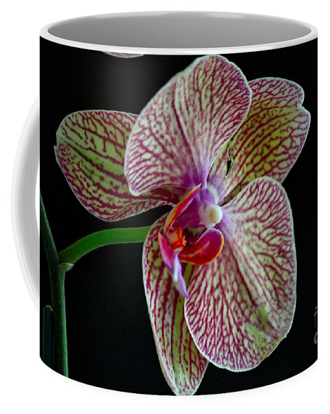 Orchid Coffee Mug featuring the photograph Study Of An Orchid 2 by Karin Everhart