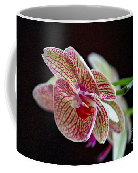 Orchid Coffee Mug featuring the photograph Study Of An Orchid 3 by Karin Everhart