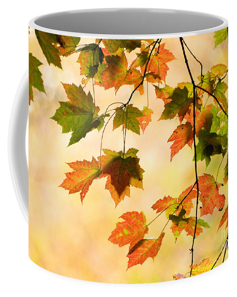 Nature Coffee Mug featuring the photograph Subtle Colors Of Autumn by Dorothy Lee