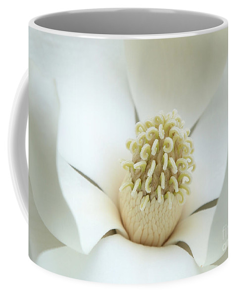 Magnolia Coffee Mug featuring the photograph Subtle Southern Magnolia by Carol Groenen