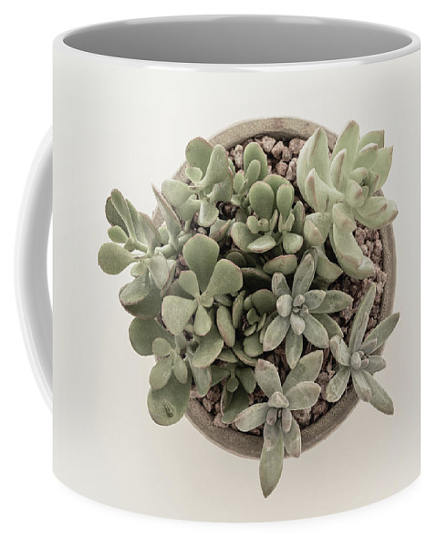 Succulent Coffee Mug featuring the photograph Succulent Plant From The Top by Kim Hojnacki