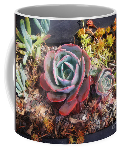 Succulent Coffee Mug featuring the photograph Succulent Plants. Multi-colored by Sofia Metal Queen