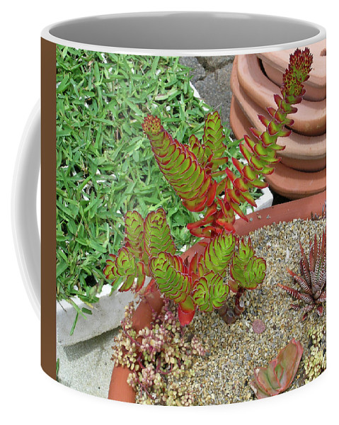 Succulent Coffee Mug featuring the photograph Suculent Illusion by Douglas Barnett